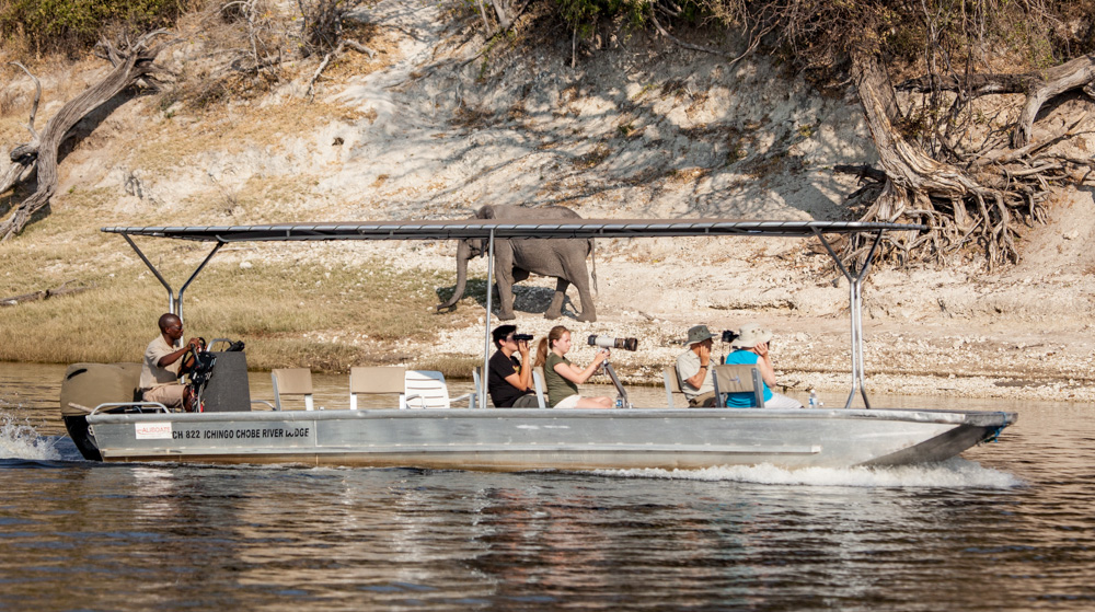 Safari Bliss On The Chobe