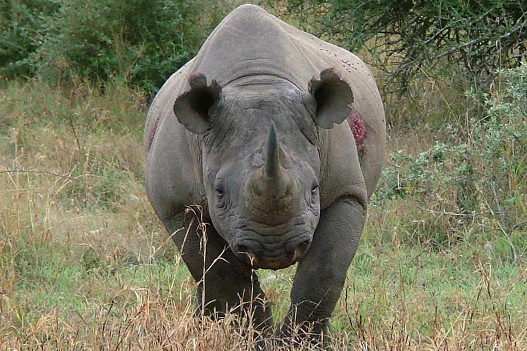 Rhino River Lodge Safari in the South African Wild