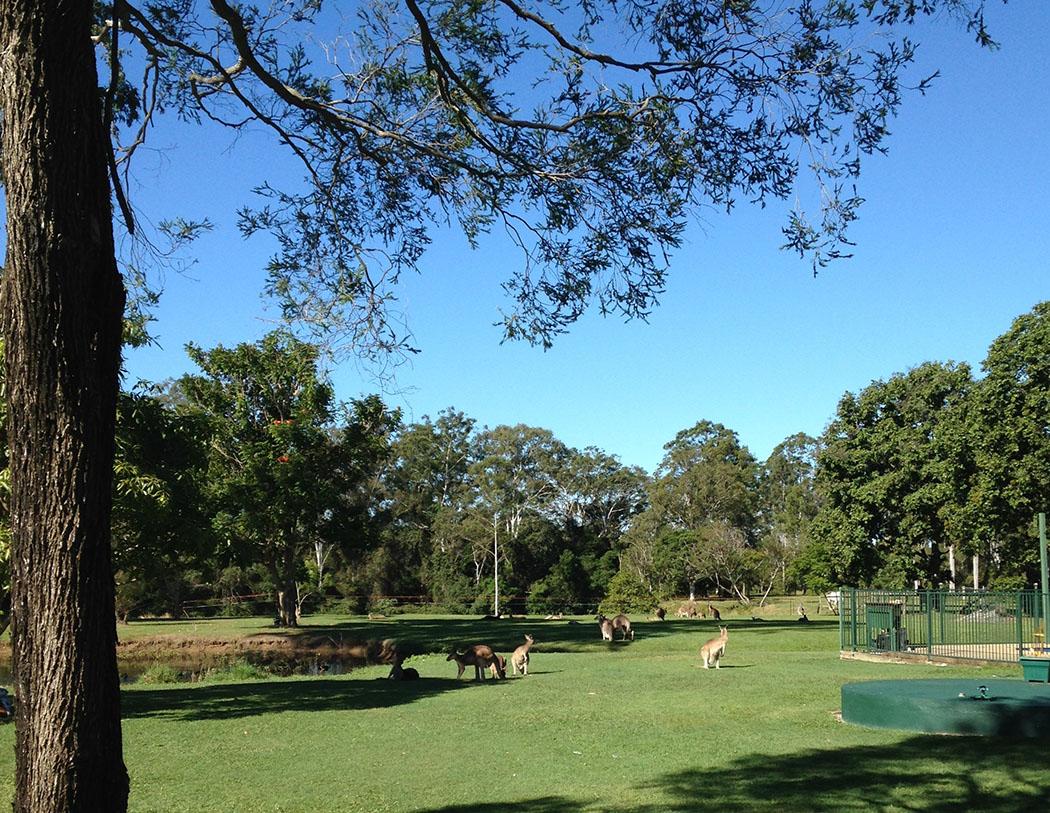 Bellmere on Richards, Queensland