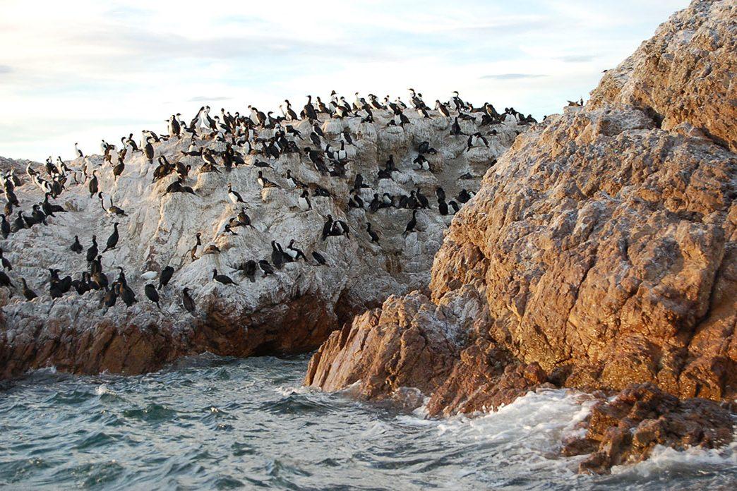 Bahia Bustamante, Patagonia Review