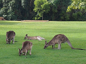 3 nights at Bellmere on Richards, Queensland Australia