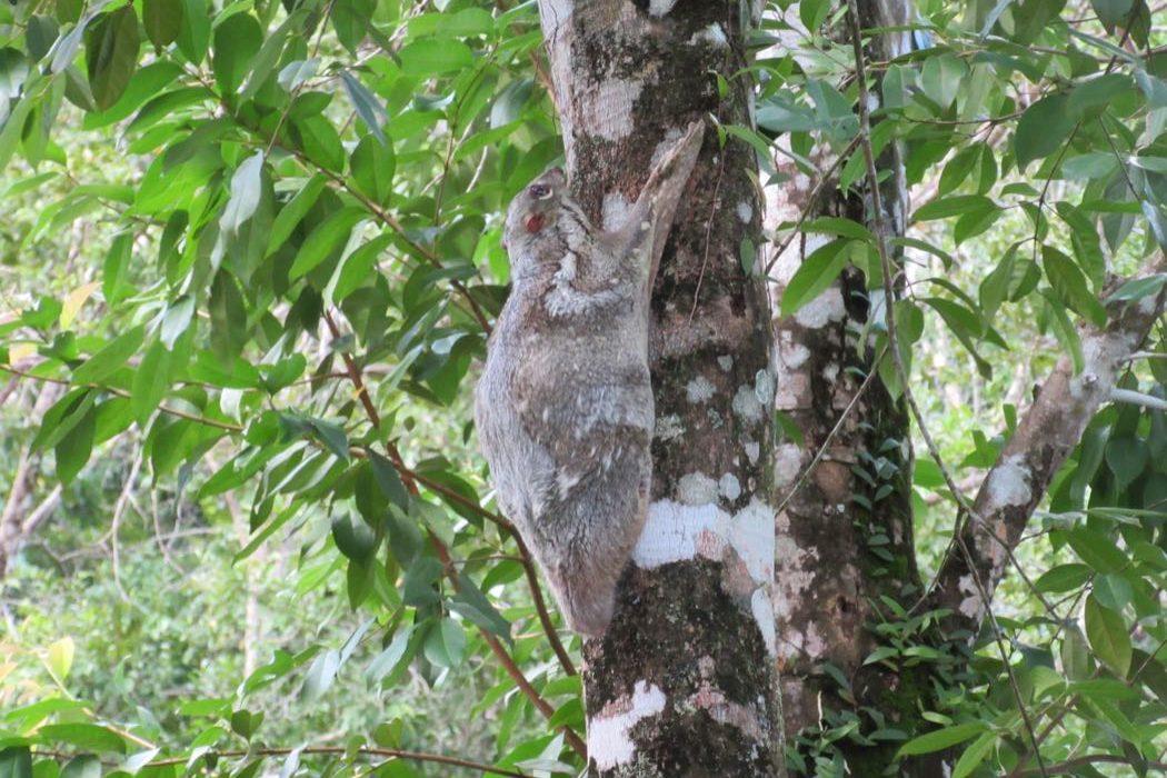 5 Great Islands for Wildlife
