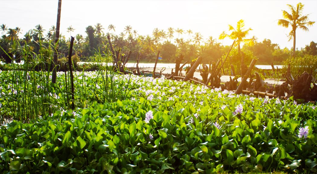 Review Of Kayal Island Retreat on Kakkathuruthu in Lake Vembanad