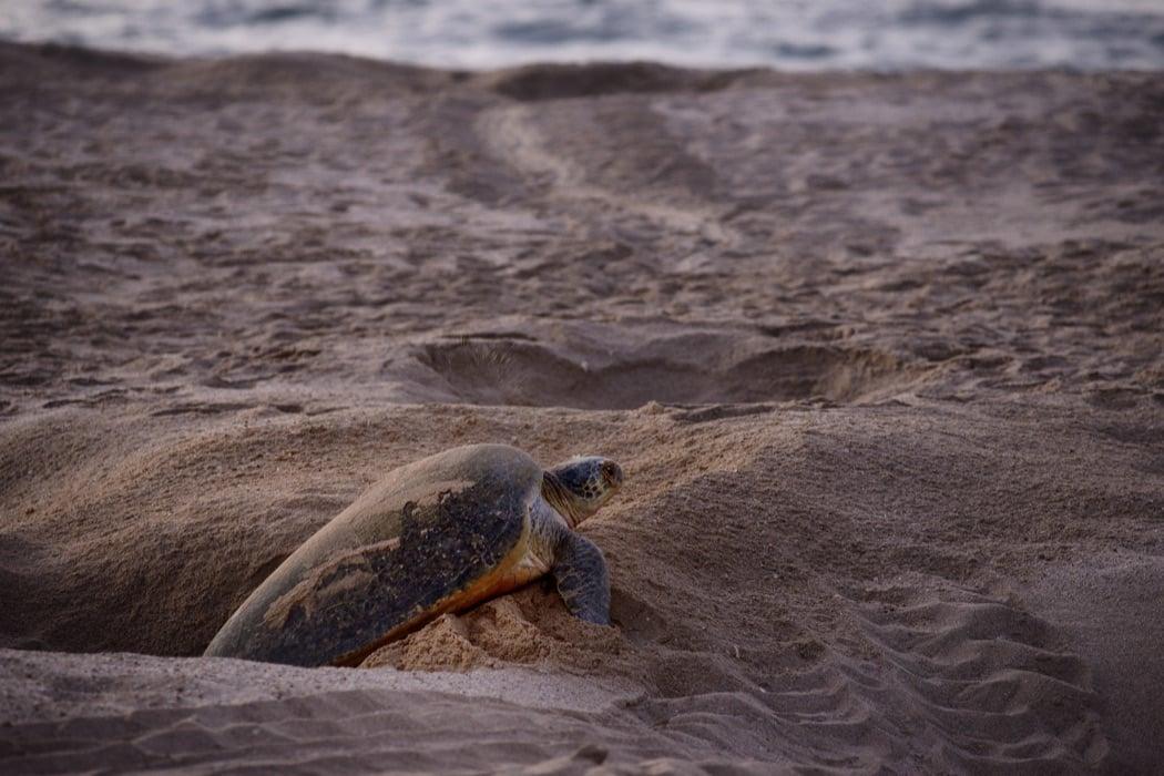 Review: Ras Al Jinz Turtle Reserve On The Ras Al Jinz Beach