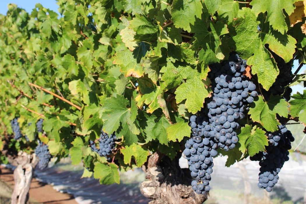 Top 5 Boutique Winery Experiences In Australia