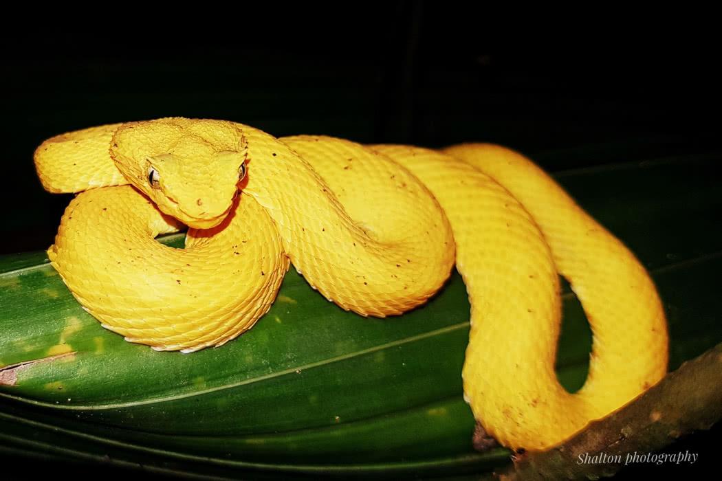 Review: Cahuita EcoVenture in Costa Rica
