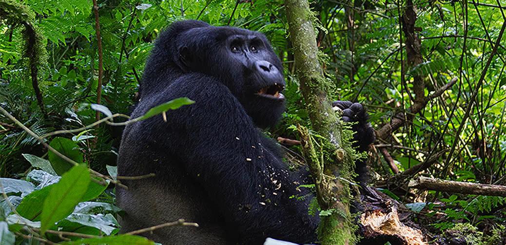 Rafiki Eco-Safaris: Tours Into The African Wilderness