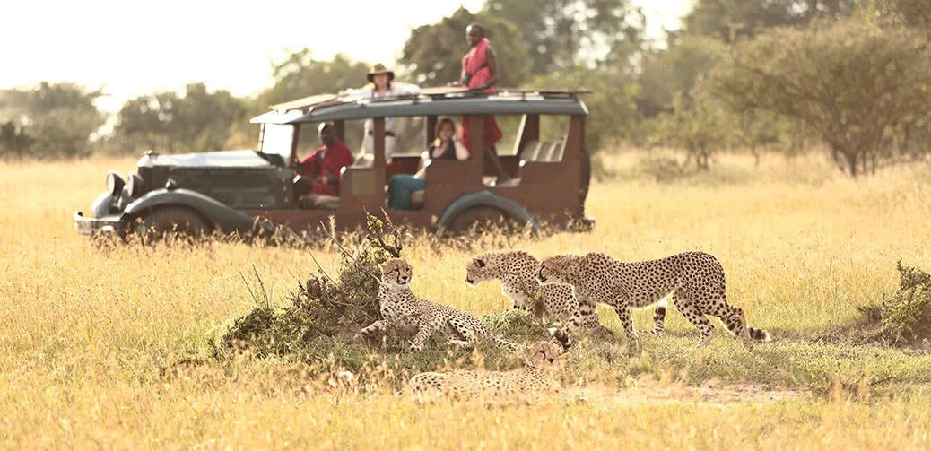 Top 10 Luxury Safari Lodges In Africa To Spot Cheetahs