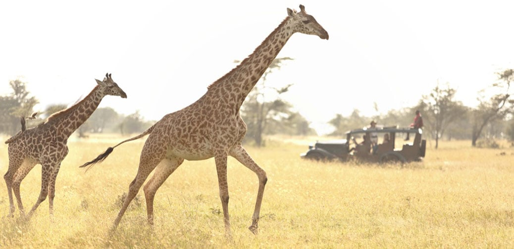 Ending Next Week: Luxury Safari In The Maasai Mara, Worth $3564 For Under $1000!