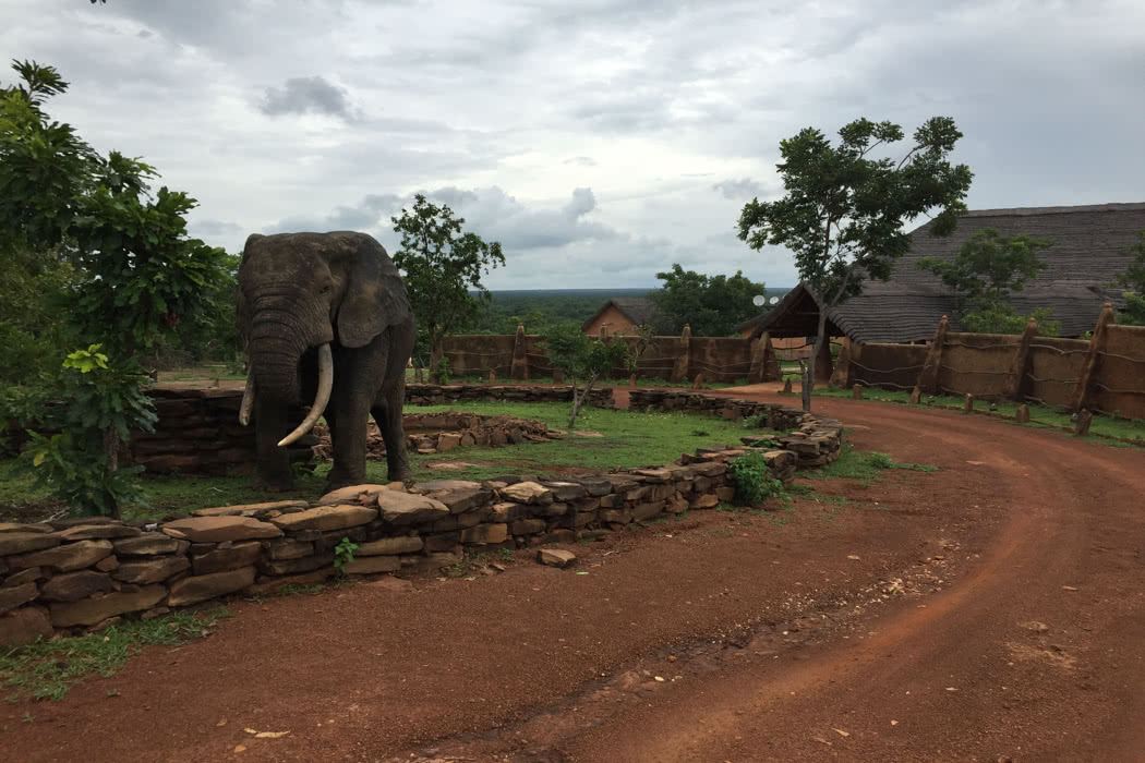 Review: Safari At Zaina Lodge In Mole National Park