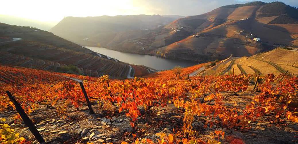 Pipadouro: Vintage, Luxury Wine Cruises in The Douro Valley, Portugal