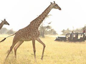 2 Nights At A Luxury Safari Camp In The Masai Mara, Kenya